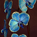 The Blue Orchid by Dragan Kudjerski