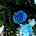 The Blue Pair by Vladimir Berrio Lemm