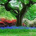 The Bluebell Wood by Joe Cashin