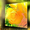 The Blushing Yellow Rose by Becky Lupe