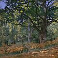 The Bodmer Oak by Claude Monet