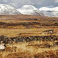 The Bog Road by Linda Mc Nulty