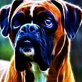 The Boxer - Electric by Wingsdomain Art and Photography
