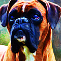 The Boxer - Painterly by Wingsdomain Art and Photography
