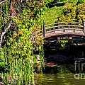 The Bridge In The Japanese Garden by Peggy Hughes