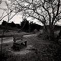The Brooding Bench by David DeCenzo
