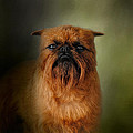 The Brussels Griffon by Jai Johnson