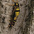 The Bug by William Norton