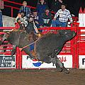The Bull Rider by Larry Van Valkenburgh