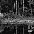 The Bush By The Lake Bw by Mike Nellums