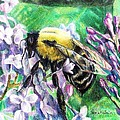 The Busy Bee And The Lilac Tree by Shana Rowe Jackson