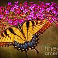 The Butterfly Effect by Elizabeth Winter