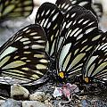 The Butterfly Gathering by Kim Bemis