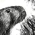 The Capybara  by Paul Sutcliffe