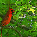The Cardinal 2 Painterly by Ernie Echols
