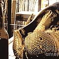 The Cask Of Armadillo by Joe Jake Pratt