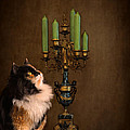 The Cat And The Candelabra by Jai Johnson