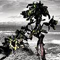 The Catus Tree Siesta Key Florida by Tom Prendergast