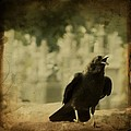 The Caw by Gothicrow Images