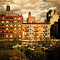The Chelsea Skyline - High Line Park - New York City by Vivienne Gucwa