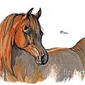 The Chestnut Arabian Horse 2a by Angel Ciesniarska