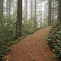 The Chosen Path by Robert Mollett