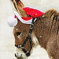 The Christmas Donkey by Jenny Gandert