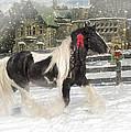 The Christmas Pony by Fran J Scott