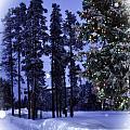The Christmas Season by Image Takers Photography LLC - Laura Morgan