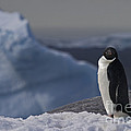 The Coldest Place On Earth... by Nina Stavlund
