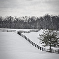The Color Of Winter - Bw by Mary Carol Story