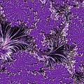 The Color Purple by Barbara Zahno