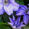 The Color Purple by Rabiah Seminole