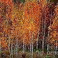 The Colors Of Autumn by Andrea Kollo