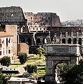 The Colosseum Through The Forum by Weston Westmoreland
