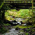 The Coming Of Autumn - Barnes Creek - Lake Crescent - Washington by Marie Jamieson