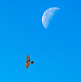 The Cooper's Hawk And The Moon by Onyonet  Photo Studios