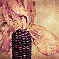The Corn On The Cob by Angela Doelling AD DESIGN Photo and PhotoArt