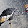 The Crane by Joachim G Pinkawa