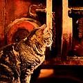 The Crane Yard Cat by Maria Urso