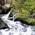 The Creek At Anna Ruby Falls by Eva Thomas