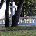 The Cross Through The Trees by Amy Hosp