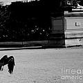 The Crow by Donato Iannuzzi