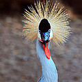 The Crowned Crane by Trina  Ansel
