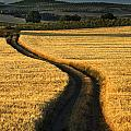 The Curved Way. by Guido Montanes Castillo