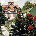 The Dahlias Garden At Petit Gennevilliers by Gustave Caillebotte
