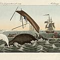 The Dangers Of Whale Fishing by Splendid Art Prints