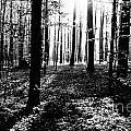 The Dark Forest by Brothers Beerens