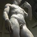 The David by Bob Phillips