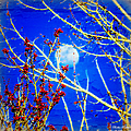 The Day The Moon Stayed Out All Day by Bobbee Rickard